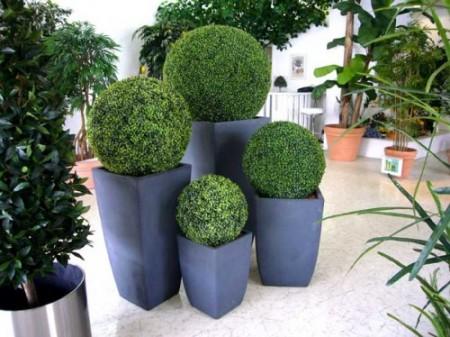 palmeras hatzenbichler und brunner palmen vermietung zierpflanzen verkauf zustellung. Black Bedroom Furniture Sets. Home Design Ideas